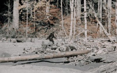 Does the Mormon Church have an official position on Bigfoot?