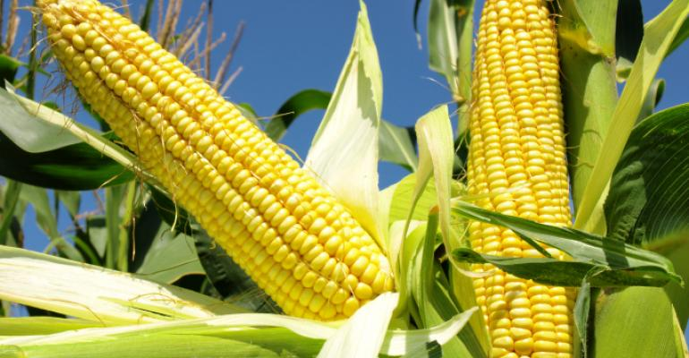 Did corn exist in the eastern hemisphere in pre-Columbian times?