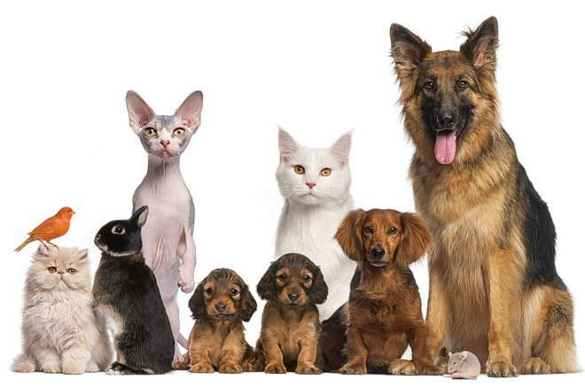 What is the Church' policy on giving blessings to pets?