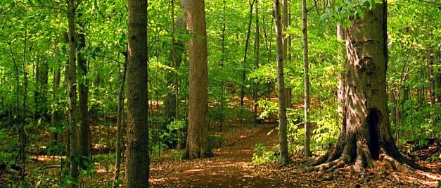 How far is the  Sacred Grove to the Smith's house?