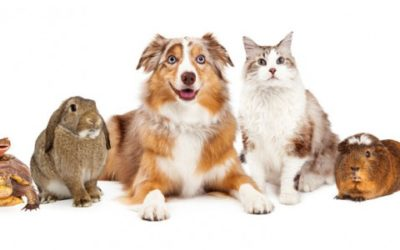 What is Church policy regarding bringing pets to church?