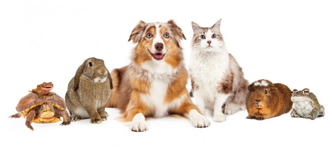 what is church policy regarding bringing pets to church