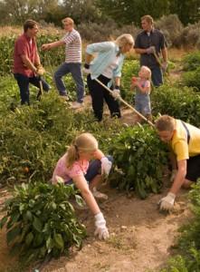 mormon family garden